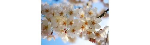 Kevad / Suvi